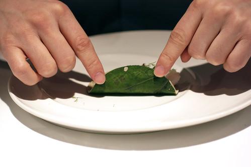 taco de ceviche de pescado @ pujol