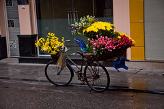 Flower Vendor's Bicycle, Hoan Kiem District - Hanoi, Vietnam