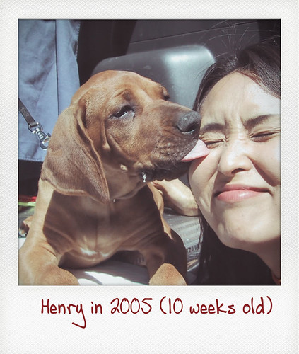 Henry licks Ako's face in 2005