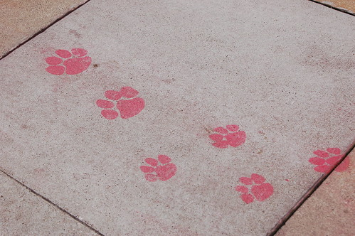 paw prints red.JPG
