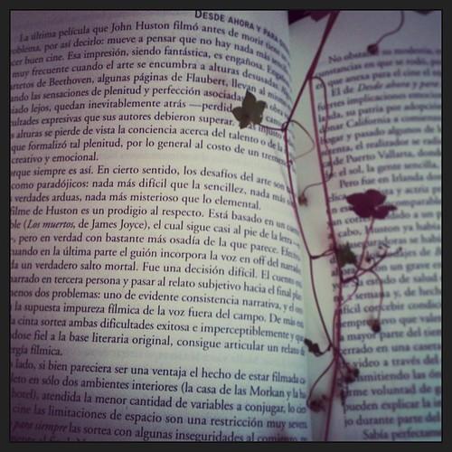 Cultivar la lectura @queleer