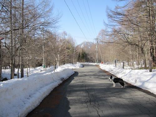 道路の雪も融けました・・・ by Poran111