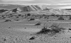 Eureka Dunes and Scrub