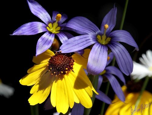 flower macro canon florida wildflowers 5dmarkiii coth5 mygearandme blinkagain 100mmmacrof28lisusm photographyforrecreation flowerthequietbeauty