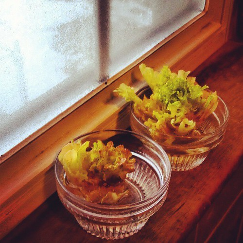 What, you don't grow lettuce in your bathroom?