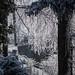 Autour du chalet, éclairage by Stephanie Booth