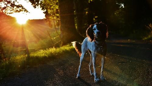 soleil rayons rais coucherdesoleil atardecer sunset août2016 soir evening hélèna chien dog chemin lumière light