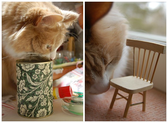 Can and chair cat