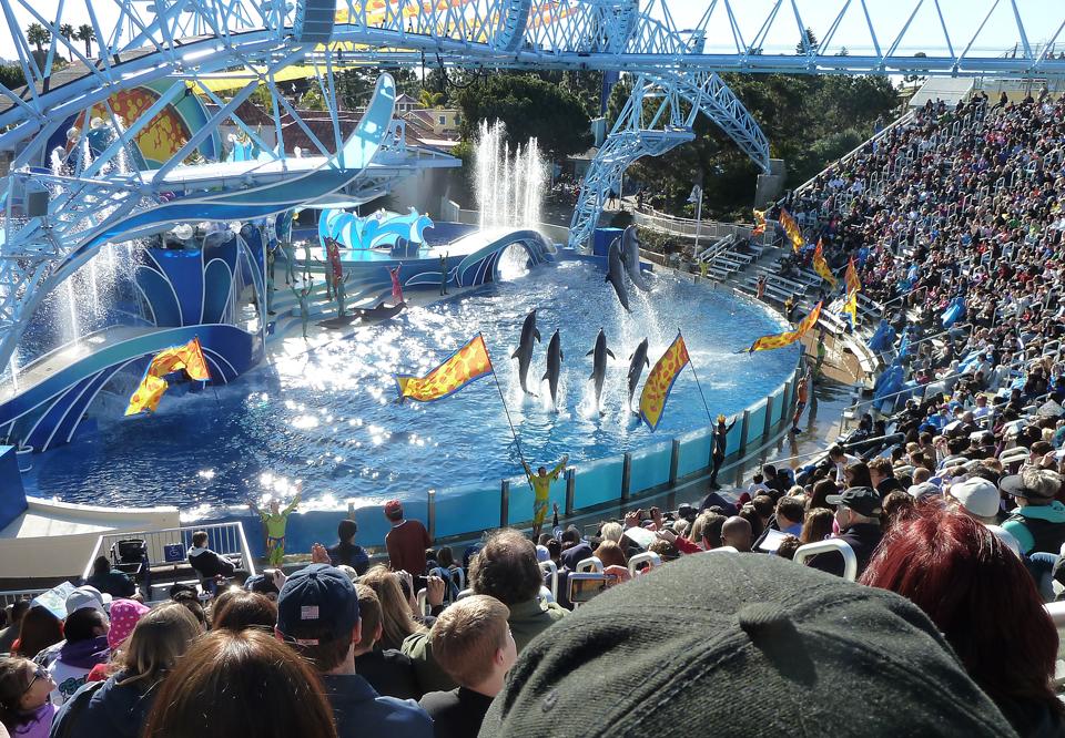sea world san diego dolphins 4
