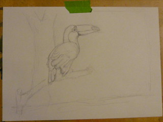 toucan work in progress