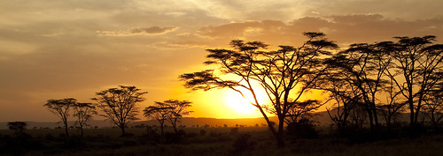 africa travel sunset sky landscape tanzania safari serengeti africansky photographyforrecreationclassic