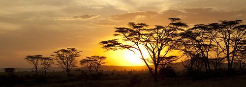 africa travel sunset sky landscape tanzania safari serengeti africansky photographyforrecreationclassic