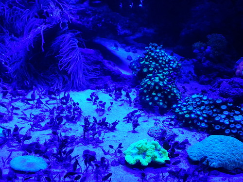 Anemones and plants under black light