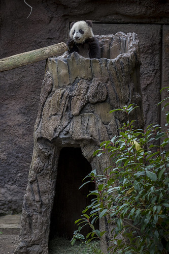 King of the log by Official San Diego Zoo