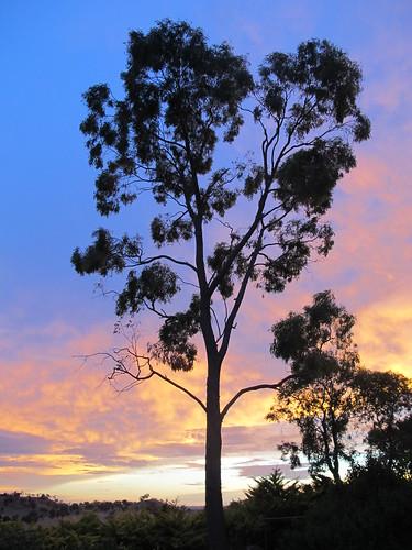 Tara Sunset