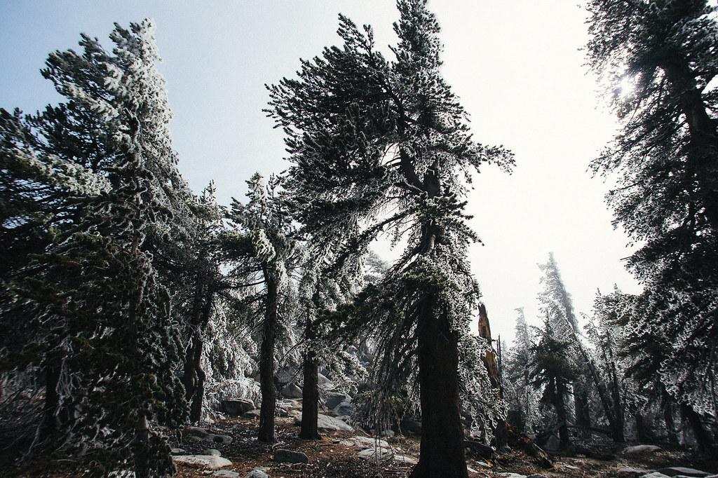 San Jacinto Peak Ice Forest