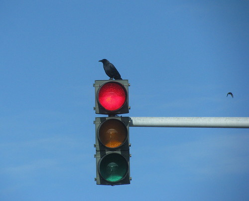Stoplight crow