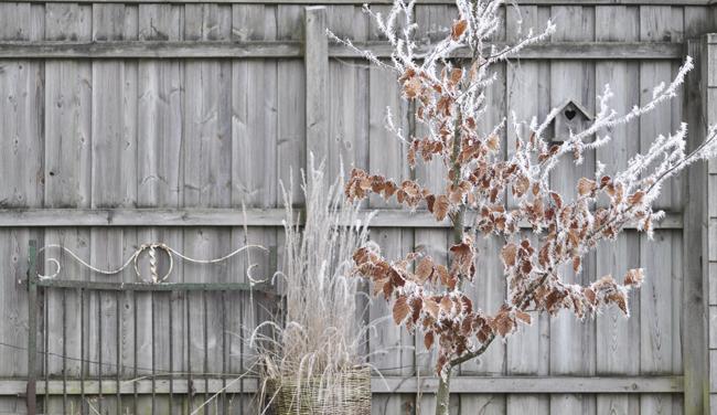wintergarden 5