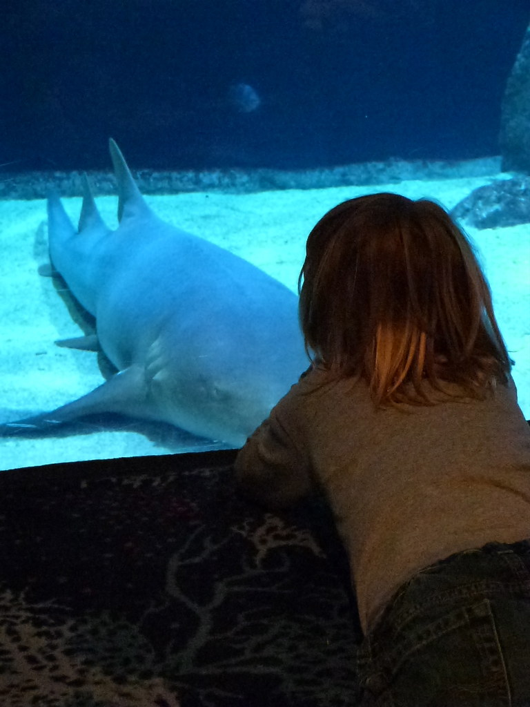 Nels + Nurse Shark