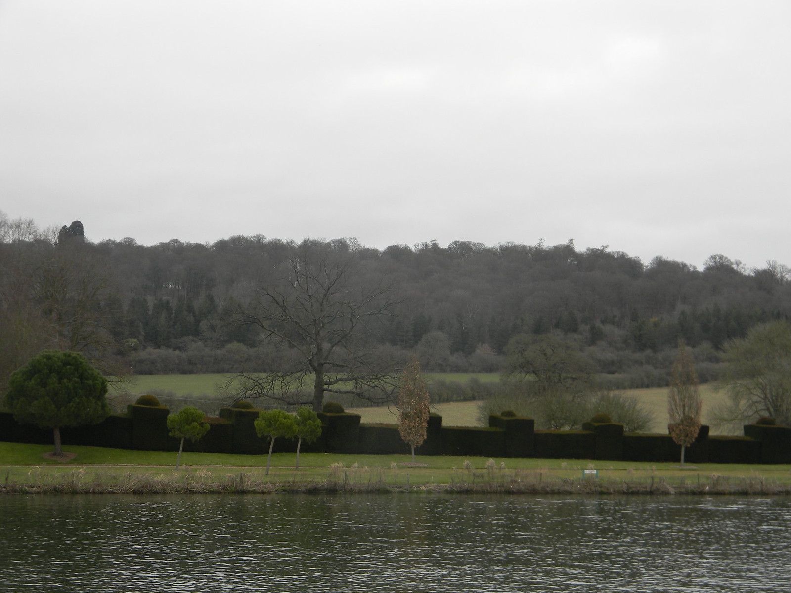 ornate hedge Henley to Marlow (from the wrong side of the river)