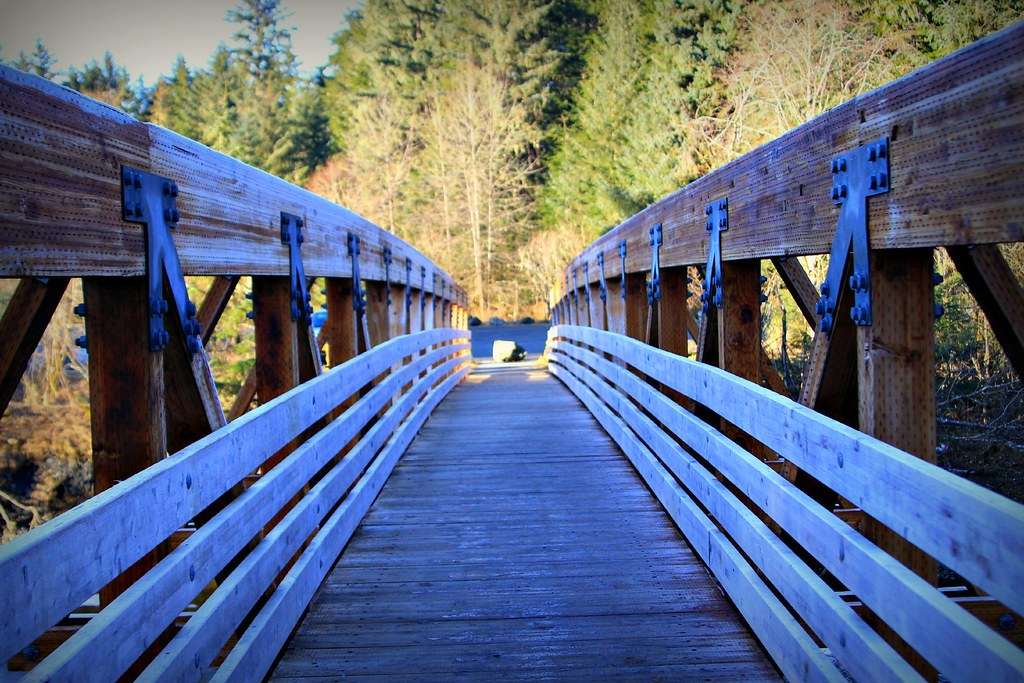 bridgeback