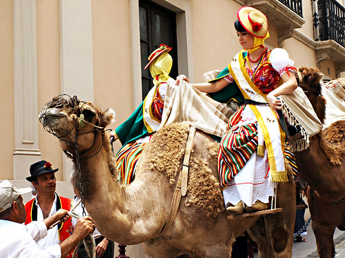 Camels at Fiesta in La Orotava