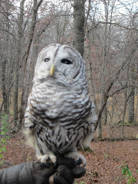 Owl at Warner Nature Center