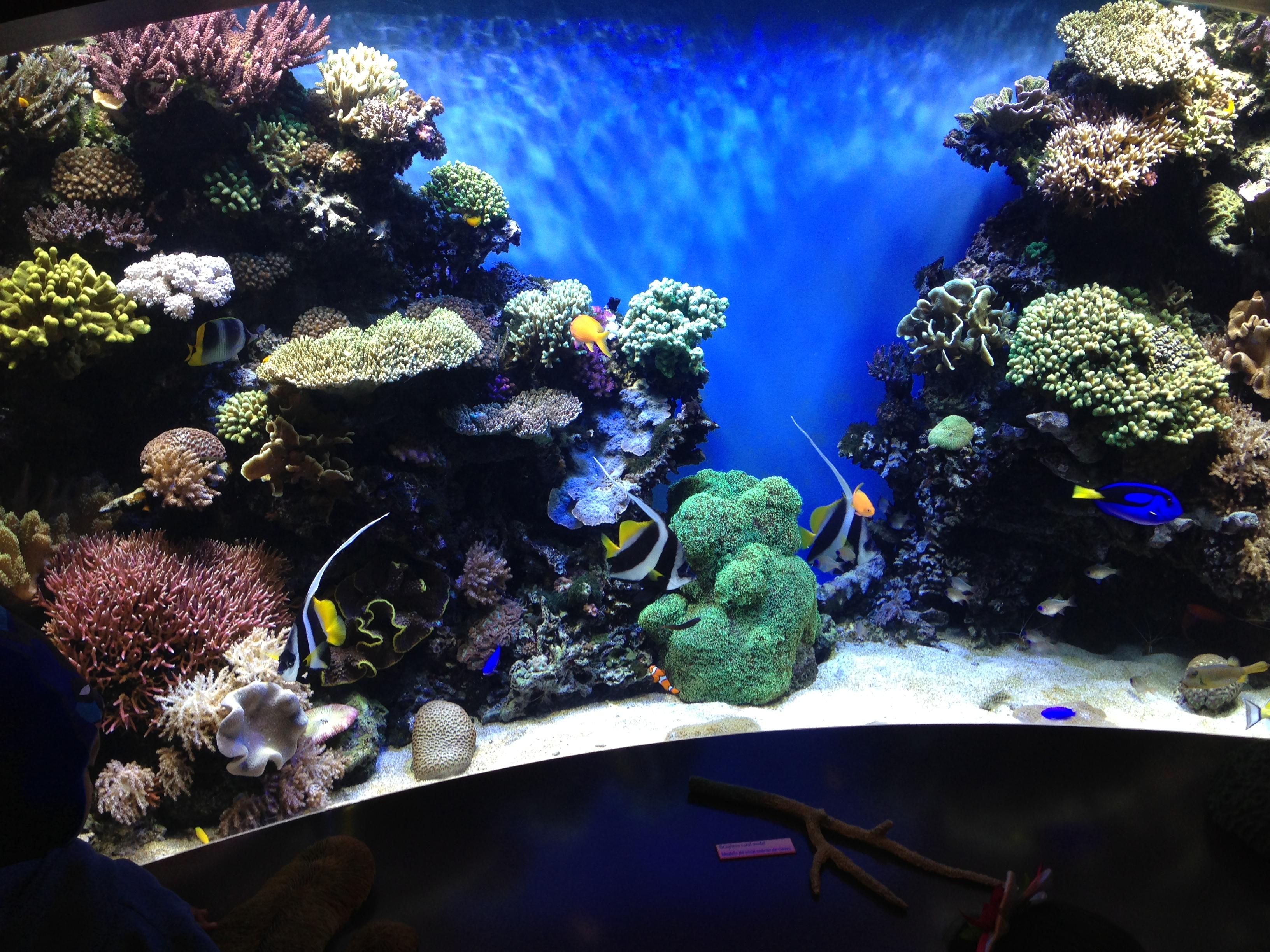 finding nemo tank Flickr - Photo Sharing!