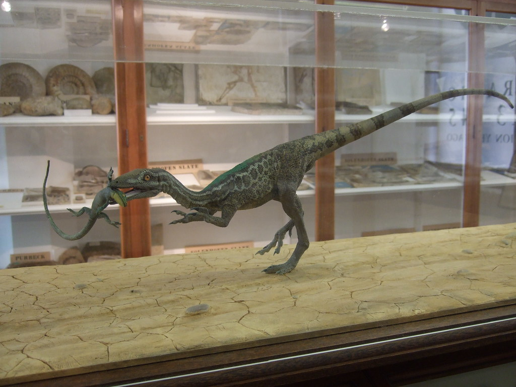 Compsognathus longipes, by Richard Hammond