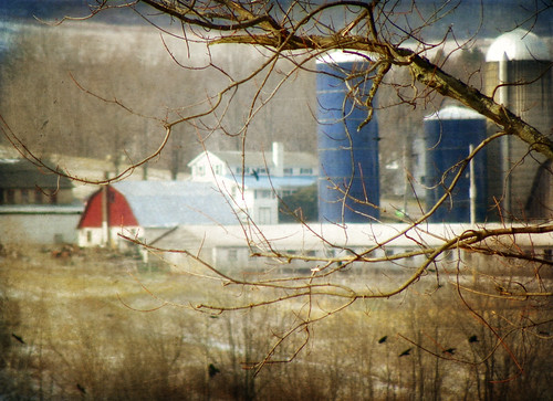 tree barn rural photoshop landscape focus kodak pennsylvania farm branches flight crows distance distant realbirds distressedjewell