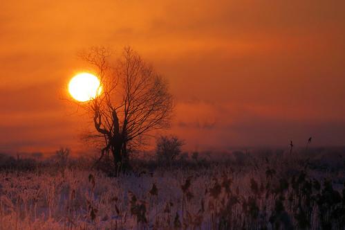 red mist tree fog sunrise landscape fotocompetition fotocompetitionbronze
