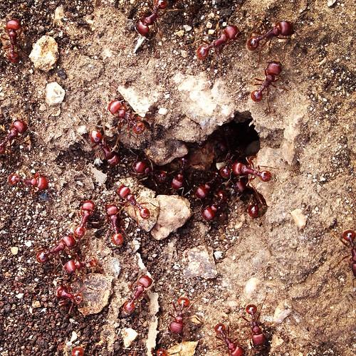 Ants!!!!!