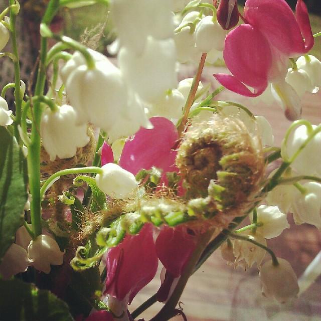 Spring fern frawns