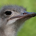 animal park, emu, FAA, Germany, Lens Nikon 70-300mm f-4.5-5.6G IF-ED AF-S VR Nikkor, Stuttgart, Wilhelma.jpg by globetrotter_rodrigo