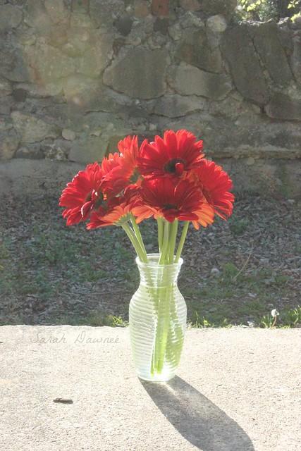Monday Flower1...