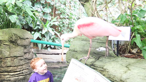 Roseate Spoonbill (With Jacob) by aviva_hadas (Amy)