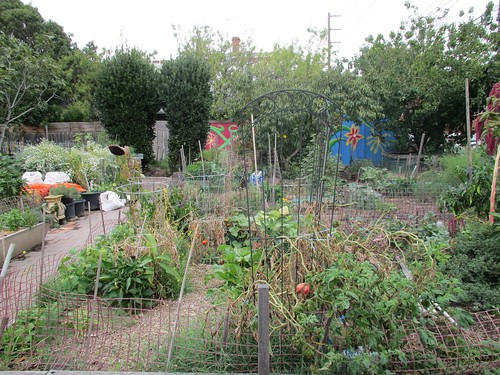 Mater Street Community Garden 52/12/1 #fp13 by Collingwood Historical Society