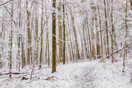 woods snow-
