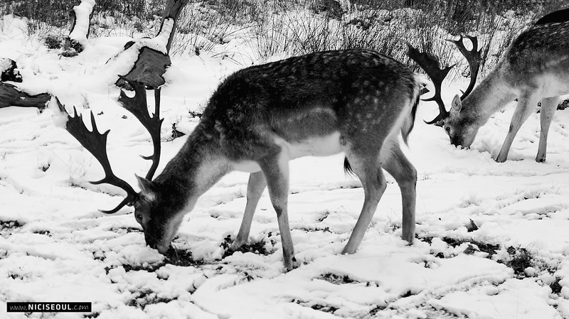 Snow Fun - Deer