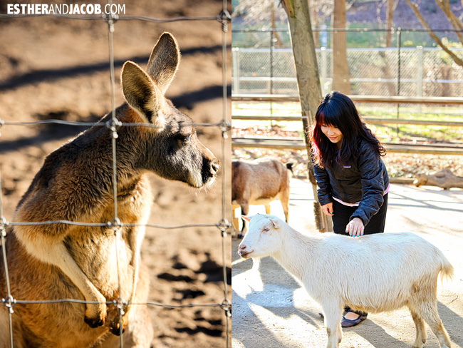 Kangaroos and Petting Zoo Zoo Atlanta | Tourists at Home Atlanta Edition