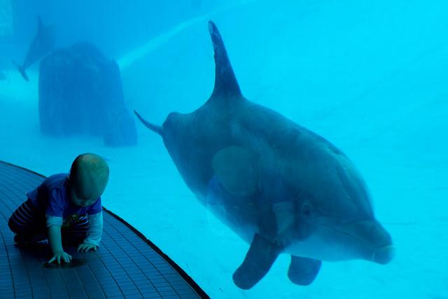 Texas State Aquarium-024.jpg