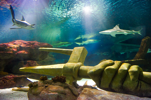 Shark, Swim, Trident, Mall of America, See Life Minnesota Aquarium, Shark Tank