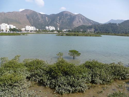 HK13-Lantau3-Tai O (7)