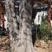 Garden Inventory: Ash Tree - 06