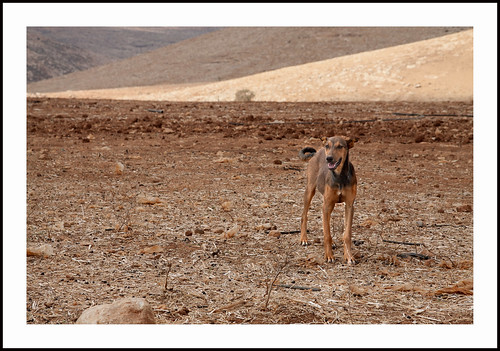 hond op de westbank by hans van egdom