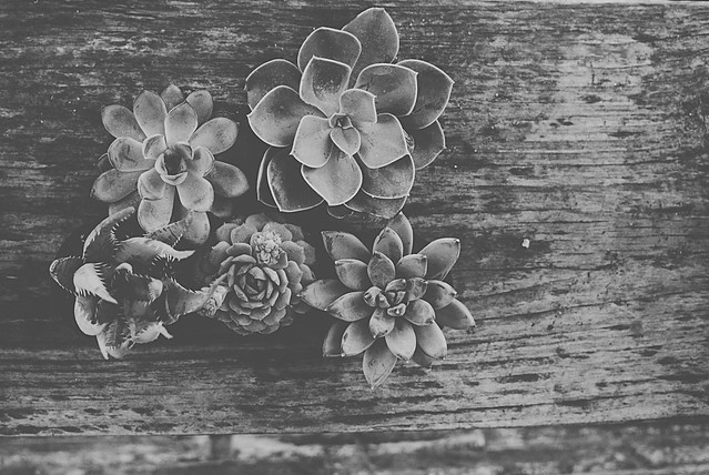 49.365: new succulents