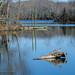Powhatan Lakes, Powhatan Wildlife Mangement Area, Powhatan, VA