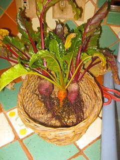 An orange beet