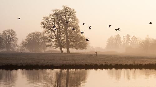 sepia sunrise dawn gulls slough berkshire kevday langleypark ooc langleycountrypark