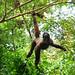 Primate Lagothrix lagotricha_08_